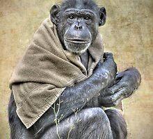 Chimpanzee by venny