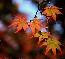 Leaf dance by yvesrossetti