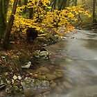 Autumn tree along the stream by Patrick Morand