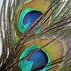Peacock Feather by TinaGraphics