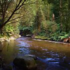Dawn at Liffey Falls, Tasmania Australia by spyke