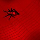 Red & Black Spider 2 by ©Dawne M. Dunton