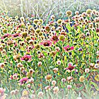 I'll Give You A Daisy A Day in HDR by Dawne Dunton