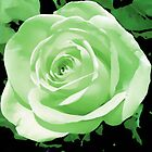 green rose flower i pad case by jenny meehan