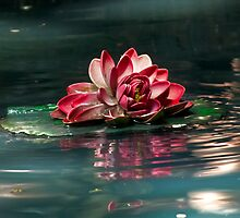 Exquisite Water Flower by Lucinda Walter