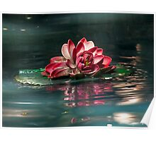 Exquisite Water Flower Poster