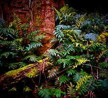Ferns on the Forest Floor. by Bette Devine