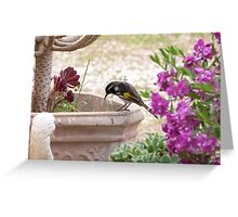 New Holland Honeyeater watching ants in the Pot. Adelaide Hills. Greeting Card
