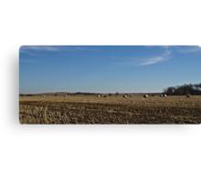Straw Fields and Prairies Canvas Print