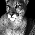 The Cougar by deborah zaragoza
