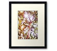 Grow and Glow Framed Print