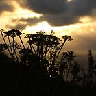 Sunset blossom by Fiona MacNab