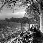 Chevin Dry Stone Wall #2 Mono by Colin Metcalf