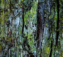 Lichen and Moss by Frederick James Norman