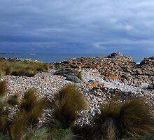 Nettle Bay - Tassie Tarkine beauty by gaylene