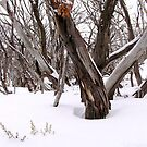 Snow Gums by Michelle Ricketts