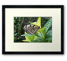 Black & White Butterfly Framed Print