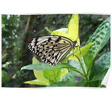 Black & White Butterfly Poster
