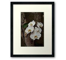 Orchids in bloom Framed Print
