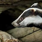 Badger Portrait by Mark Hughes