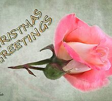 Christmas Greetings ~ A Rose by SummerJade