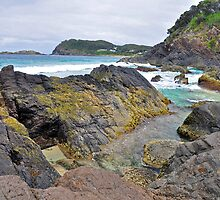 Seal Rocks by Terry Everson