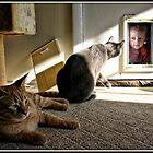 Wyatt and the Cat Door by Mikell Herrick