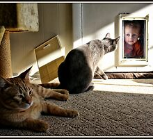 Wyatt and the Cat Door by Mikell Herrick