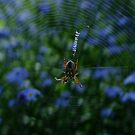 Harriot's Web by Gabrielle  Lees