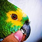 Parrot Brazilian Colors [ iPad / iPod / iPhone Case ] by Mauricio Santana