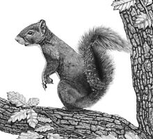 Mr Squirrel by Paul Stratton