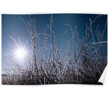 icy twigs and branches in snow against seasonal blue dawn Poster