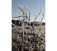 icy twigs and grass in snow against blue river and sky Photographic Print