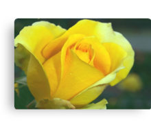 Rose of hope Canvas Print