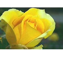 Rose of hope Photographic Print