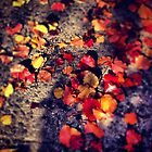Brilliant Fall Leaves by SylviaS