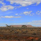 South Australia Arid Zone by Hannah Nicholas