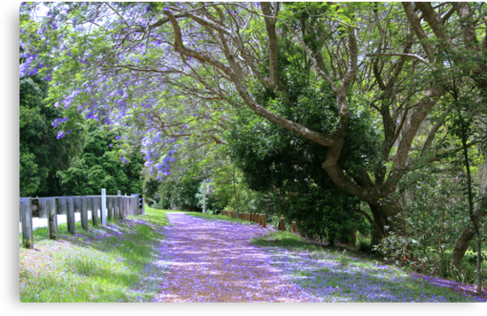 jacaranda walk ..mt.tamborine  by gail woodbury