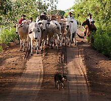 Pantanal Herding by Brendon Doran