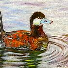 Ruddy Duck by lindybird