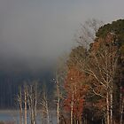 Three's A Crowd, Bald Eagles, Jordan Lake, NC by Denise Worden