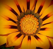 Orange And Brown Flower by kahoutek24