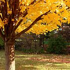 Golden Maple  by SolasandScath