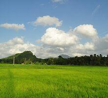 Paddy Field in Sri Lanka by Haz Preena