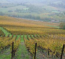 Greve in Chianti - Toscana - Italy by gluca