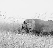 Elephant in the reeds by maddie5