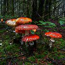 The Reds Are Here by Charles & Patricia   Harkins ~ Picture Oregon