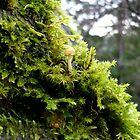 Mossy Rock by Jess Meacham