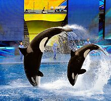 Sea World, Orlando, Florida by fauselr
