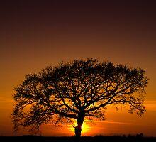Baobab by Davorin Mance
